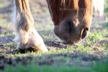 ottensen-pferde_1020-01